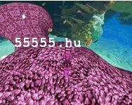 Seahorse roundup shockwave mászkálós